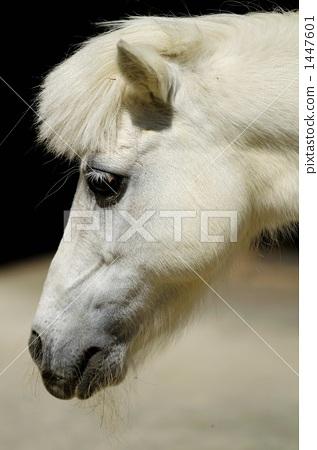 图库照片: 动物园 牧场 小马