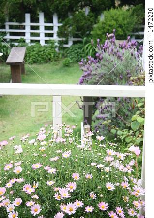 院子 游廊 花园