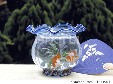 金鱼缸 金鱼 扇子