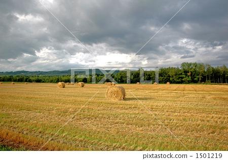 田地 农村地区 原野