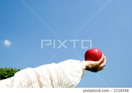 苹果 人类的手 苹果树上