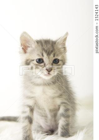 壁纸 动物 猫 猫咪 小猫 桌面 317_450 竖版 竖屏 手机
