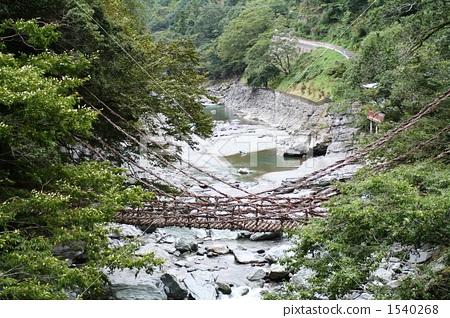 图库照片: 藤网桥 四国岛 树