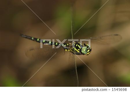 昆虫 飞行 一只小动物