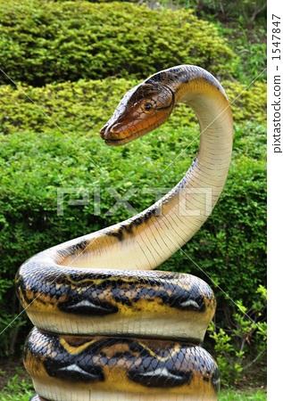 旭区 首页 照片 爬行动物_昆虫_恐龙 爬行动物_两栖类 蛇 大毒蛇 大蛇