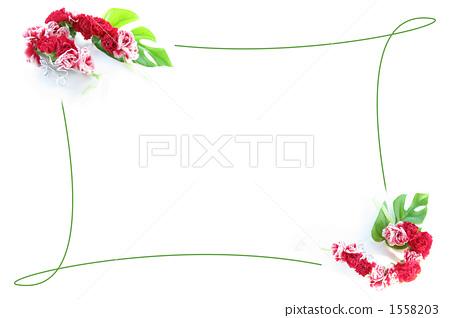 照片 框架 帧 边框 首页 照片 植物_花 花 康乃馨 框架 帧 边框  *