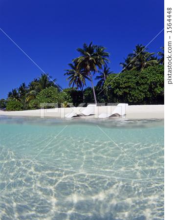 蓝天 海滩 椰子树