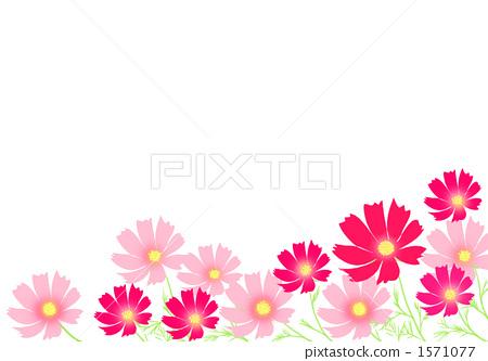 首页 插图 植物/花 大波斯菊 大波斯菊 非常 秋天  *pixta限定素材仅