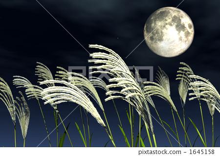 插图素材: 日本蒲苇 夜空 月亮