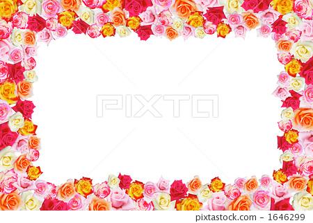 图库照片: 玫瑰花 白底 去底