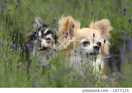 狗 一只动物 动物群