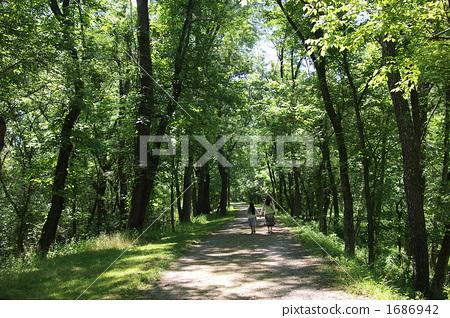 茂密的森林 灌木丛 散步-图片素材 [1686942] - pixta