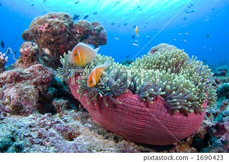 幼儿园教师介绍栏图片海洋系