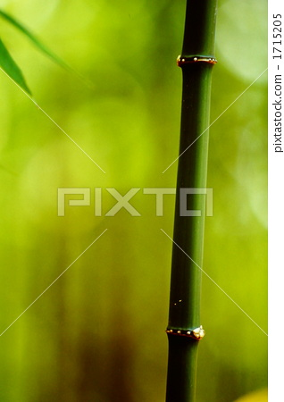竹子 节点 部分