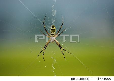 图库照片: 织网蜘蛛 蜘蛛 昆虫