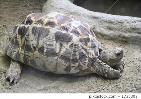 乌龟 爬虫类的 爬行动物