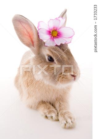 花朵 白色背景 可爱