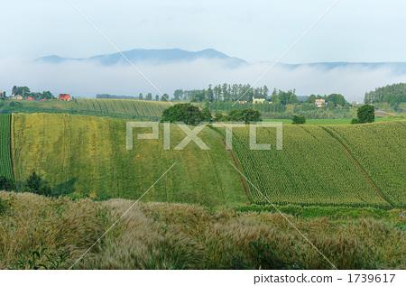 图库照片: 小山和农村早晨风景