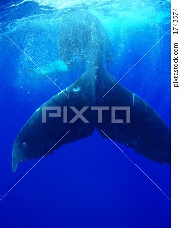 一只动物 动物群 鲸鱼