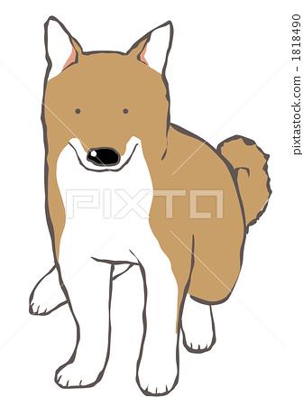 柴犬 动物宝宝 动物群