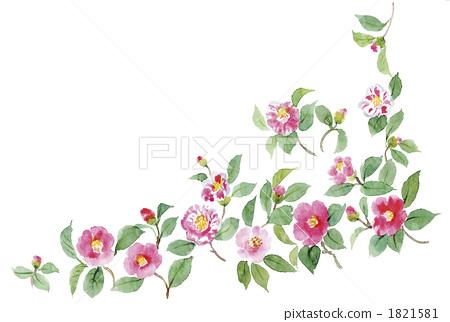 插图素材: 山茶花 日本山茶 花朵