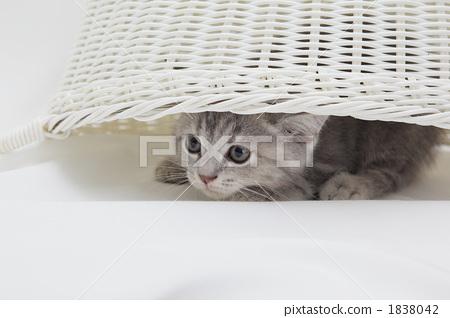 图库照片: 小猫 动物 毛孩