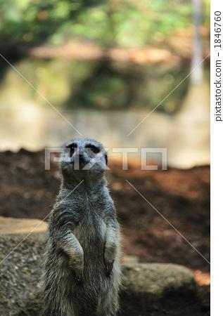 图库照片: 海猫 陆生动物 动物