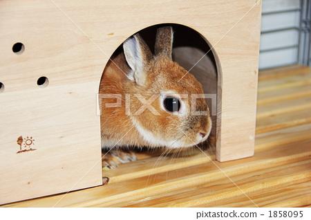 动物 动物宝宝 兔子-图库照片