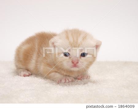 壁纸 动物 猫 猫咪 小猫 桌面 450_356