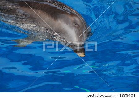 图库照片: 海洋动物 海豚 哺乳动物