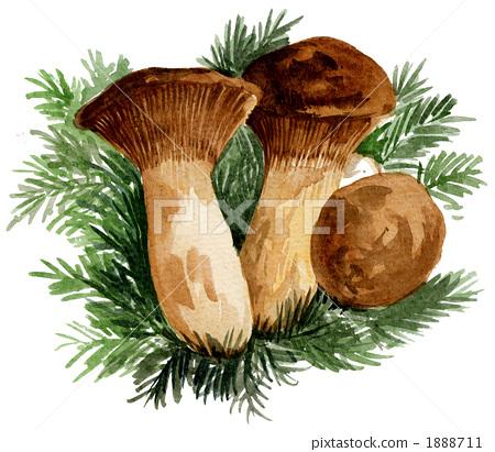 彩色蔬�:i��i-_首页 插图 蔬菜_食品 蘑菇 杏鲍菇 ellingi 1019pix.