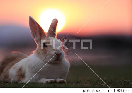 图库照片: 小动物 陆生动物 兔子