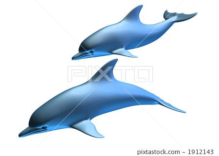 父母和小孩 哺乳动物 海豚
