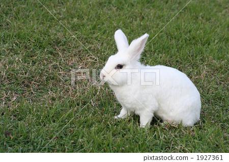 动物宝宝 动物 白兔子