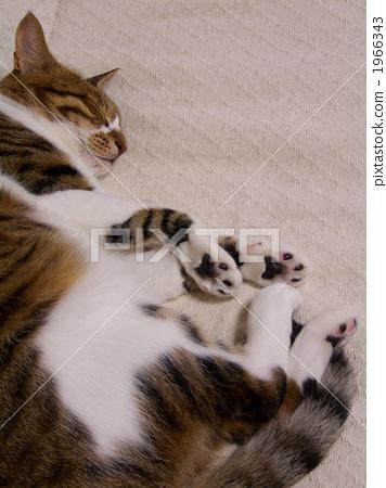 图库照片: 睡觉 动物 猫