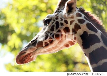 动物宝宝 侧面图