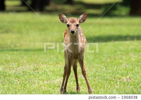 图库照片: 小鹿 陆生动物 小鹿斑比