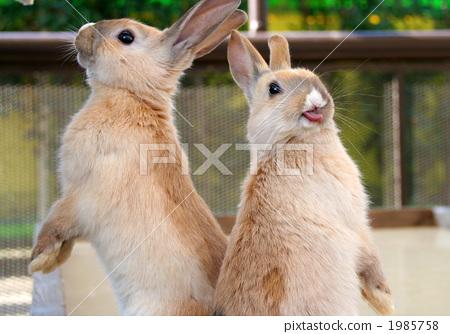 图库照片: 幼兔 小动物 兔子