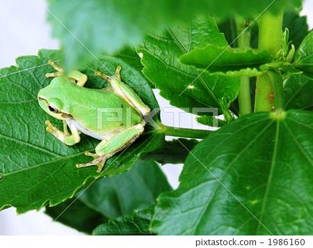 绿色 树叶 动物