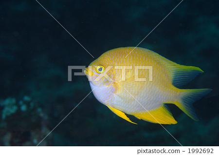 鱼的五年级小动物的作文600字-我最喜欢的小动物600