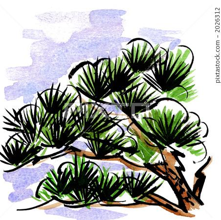 松树 树形 水彩画