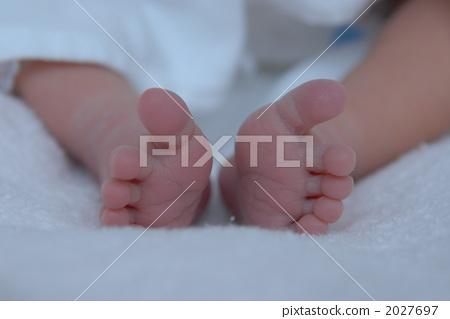 脚 身体部位 动物宝宝