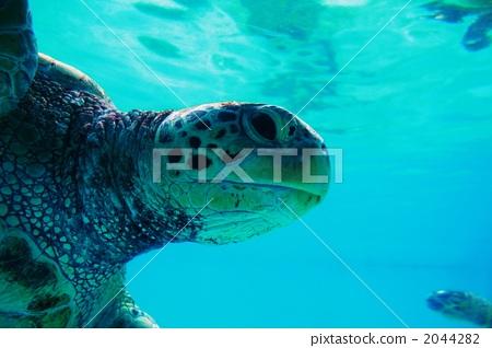 乌龟 海龟 海洋动物