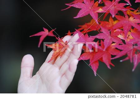 秋天颜色 观赏秋天的树叶 手