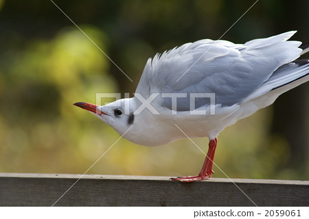 动物群 一只动物 飞鸟