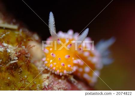 图库照片: 海中珍宝鱼 海洋动物 海参