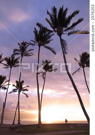 图库照片: 日落 夕阳 椰子树