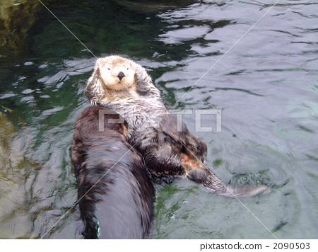 好看罕见海动物