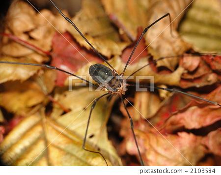 昆虫 漏洞 节肢动物