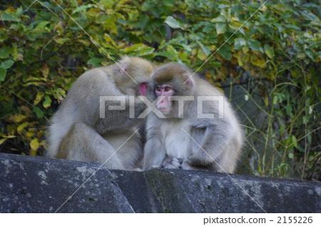 猴子 父母和小孩 动物群